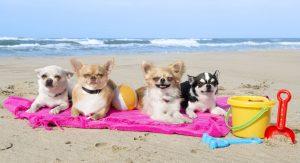 Dogs-on-beach