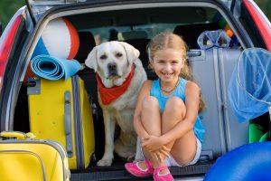 pet-holiday-travel