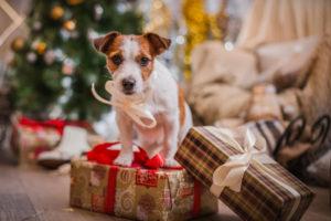 Christmas-puppy
