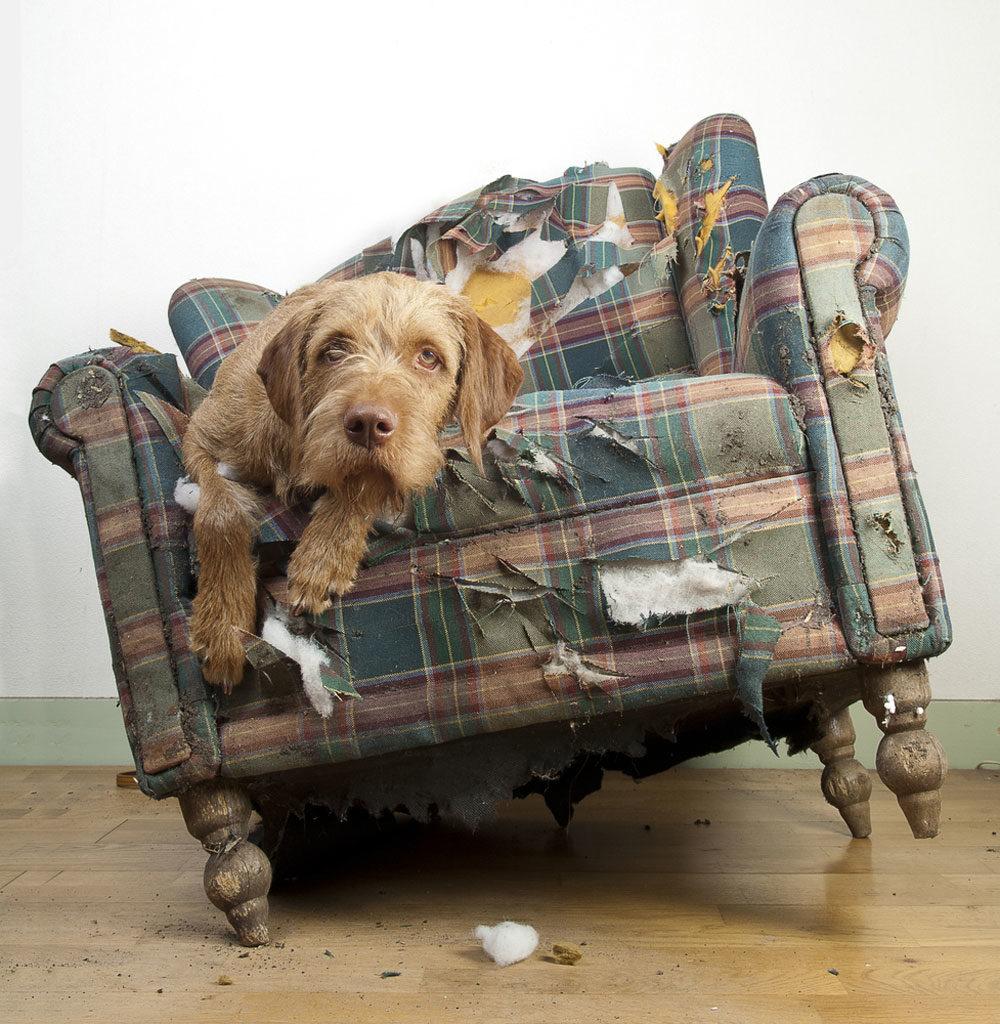 dog-chew-chair