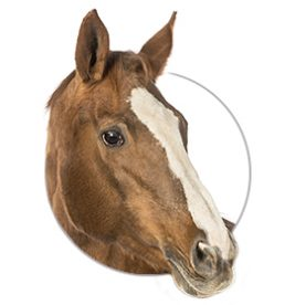 EquioPathics / Large Animal