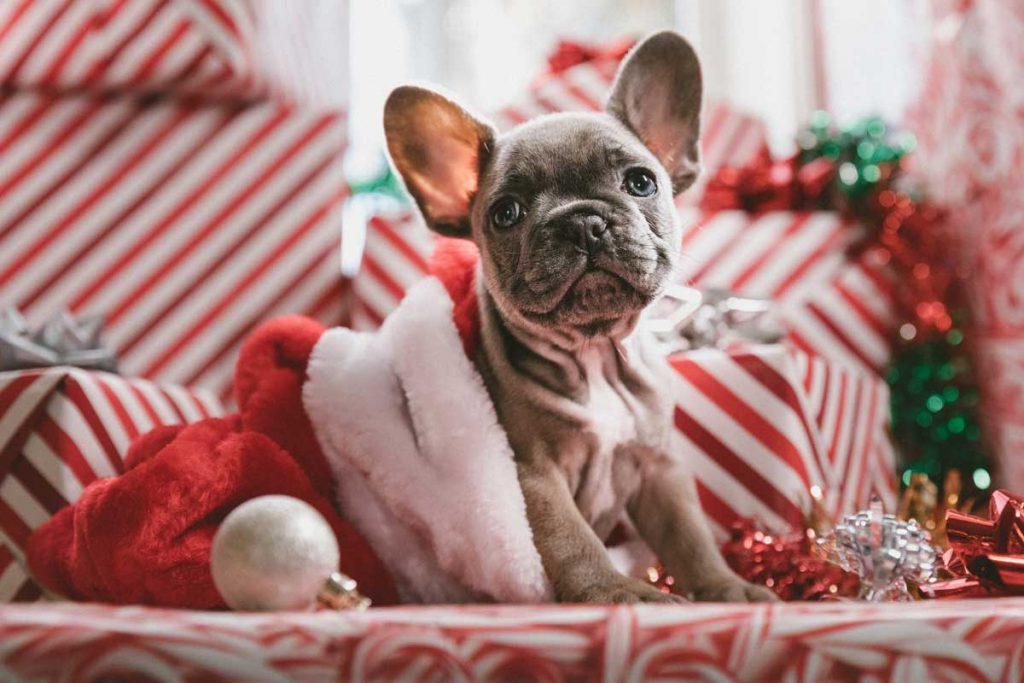 Pet-Christmas