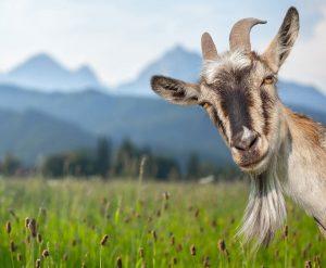 HomeoVet-natural-medicine-for-animals