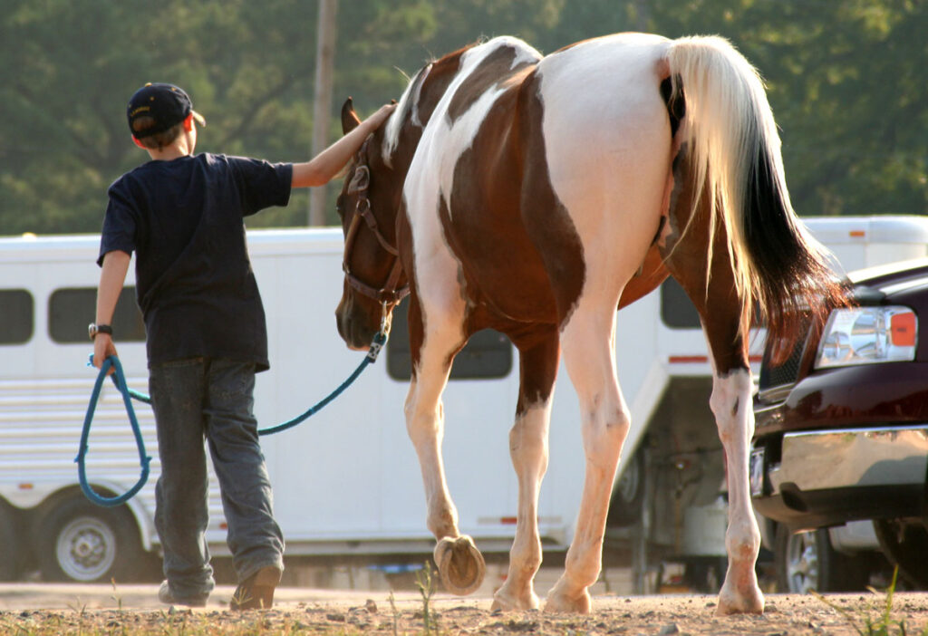 Therapy-Horse