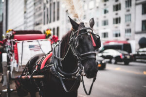 horse-in-carriage