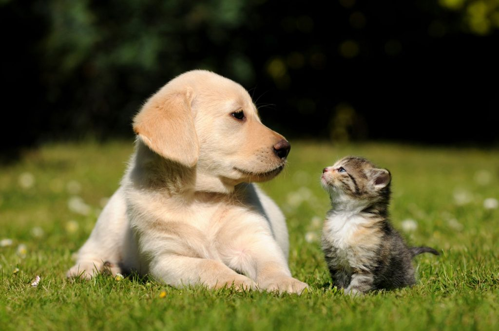 How to Take Care of Kittens and Puppies - HomeoPet