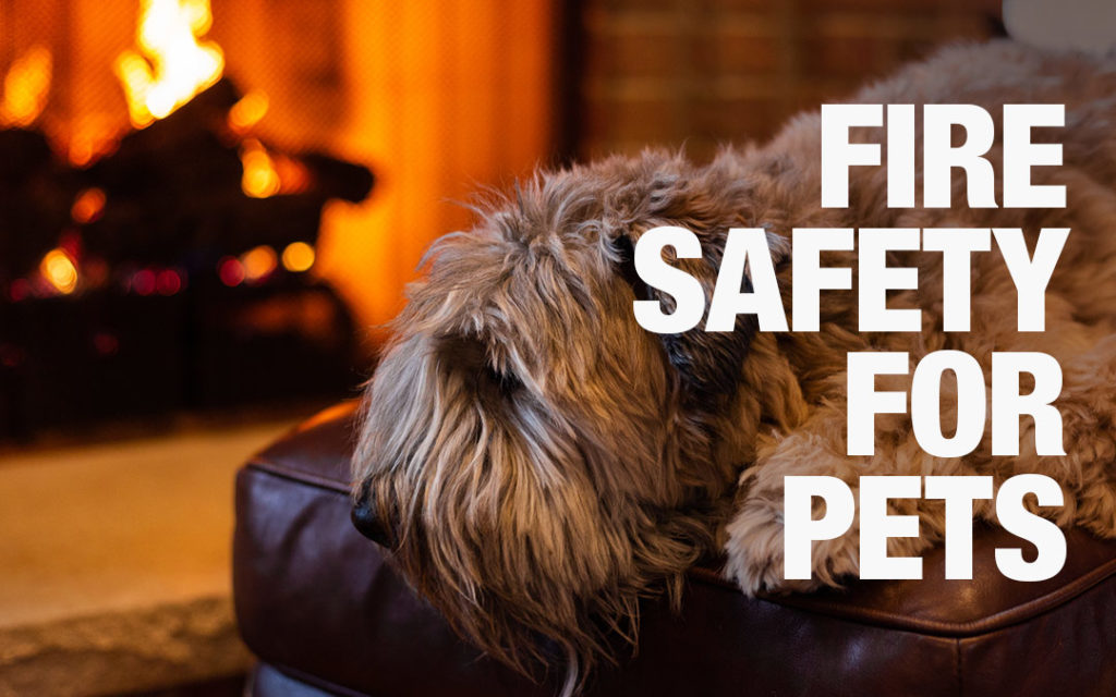Fire-Safety-For-Pets