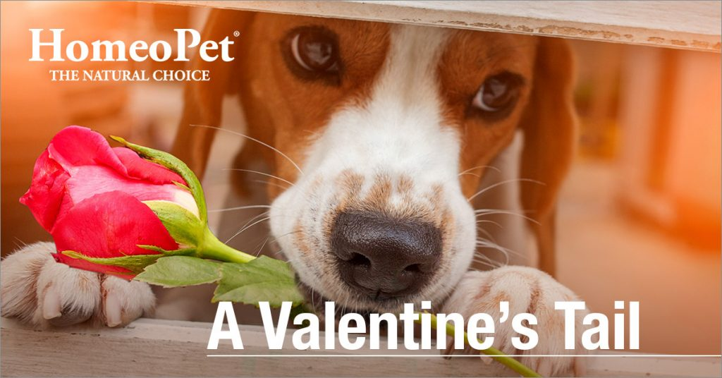 Pet_Valentines