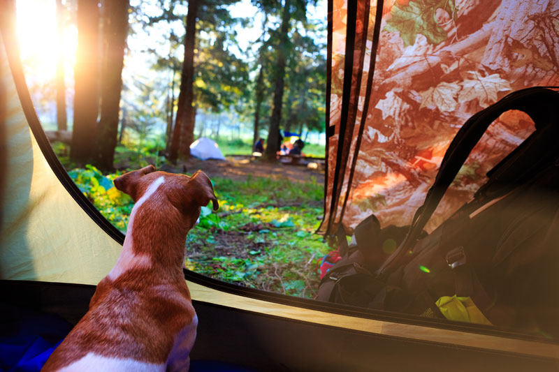Camping-with-your-dog