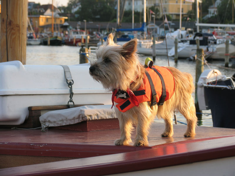 boating-with-your-dog