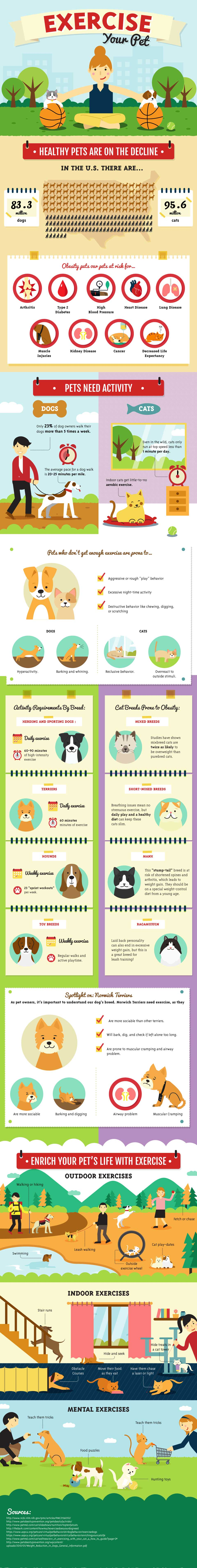 Pet Exercise Infographic