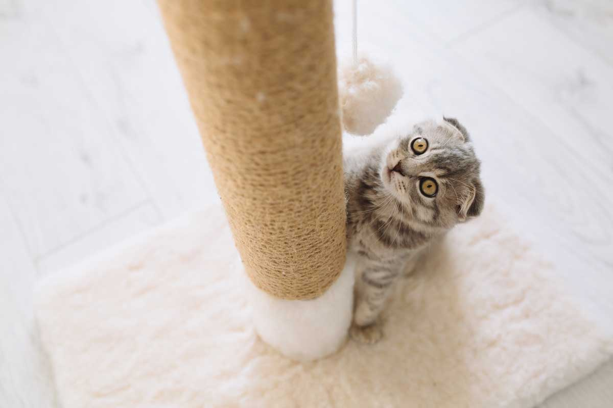 Cat-Playtime