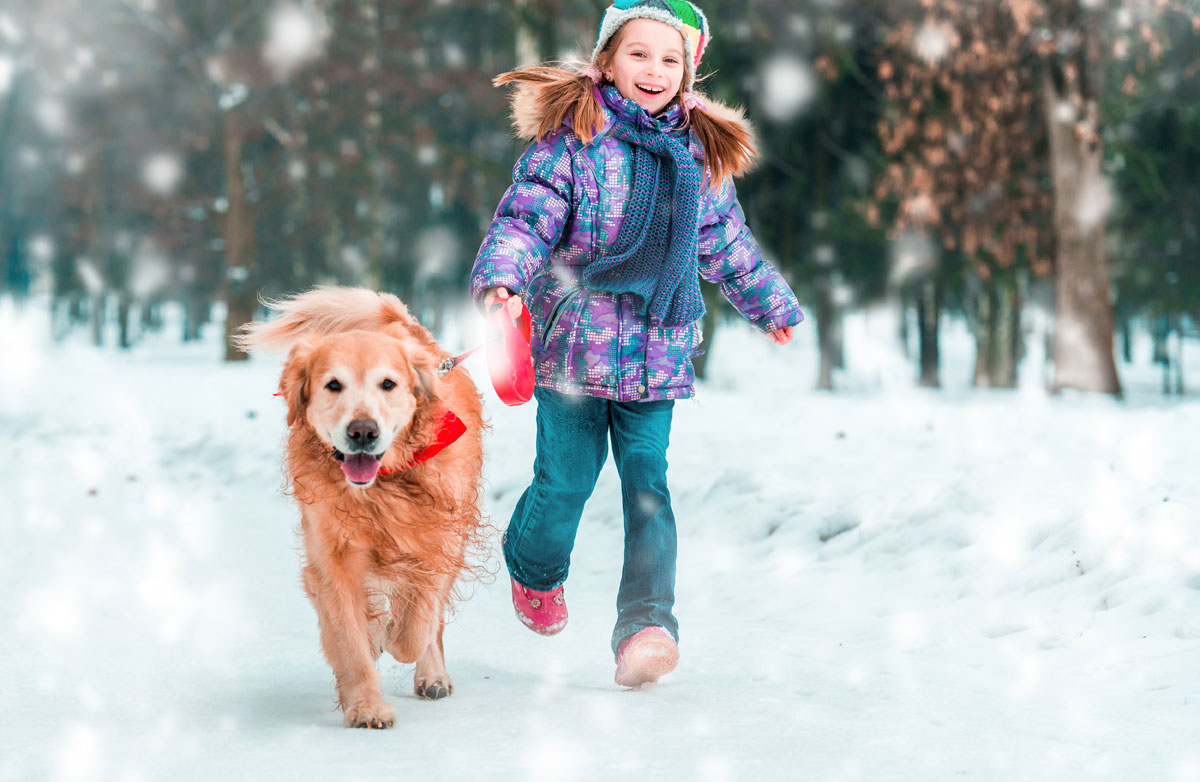 Winter-fun-with-your-dog