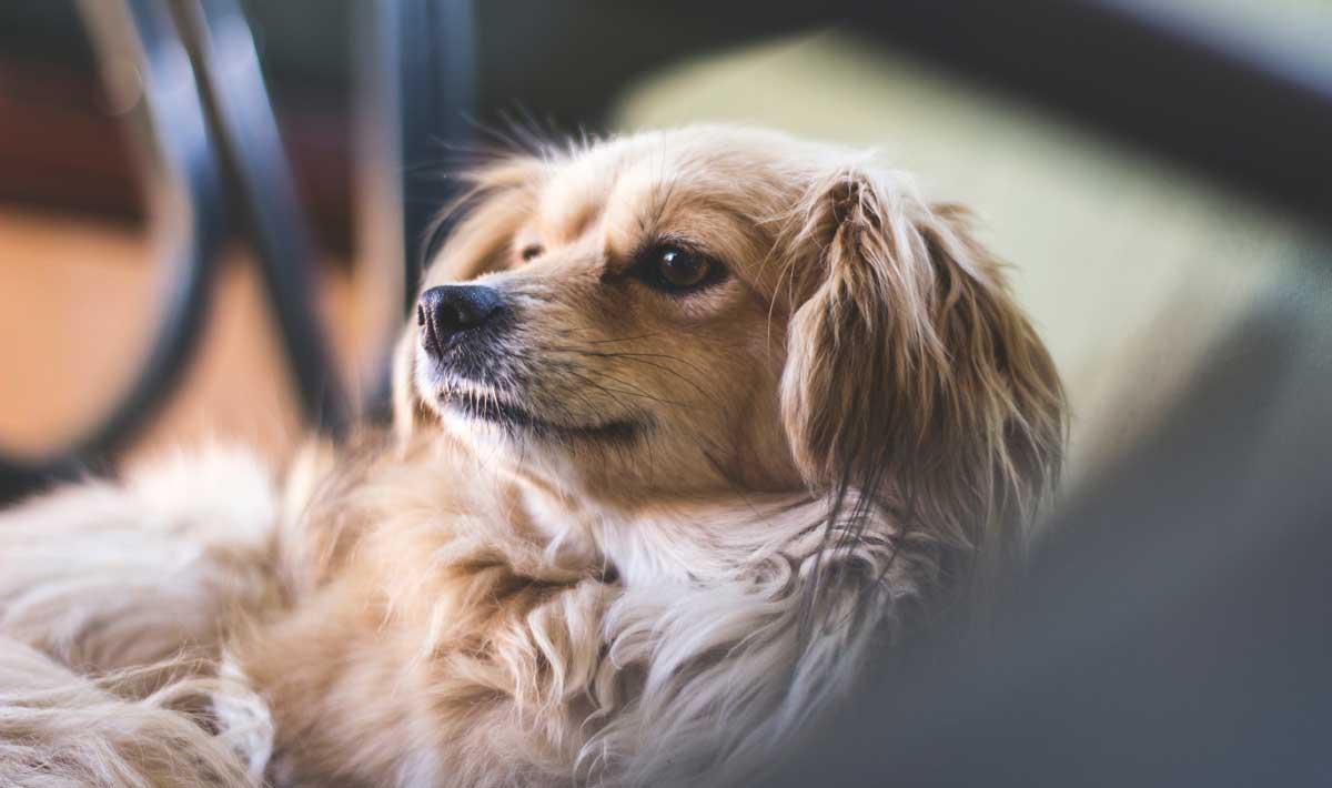dog-friendly-home