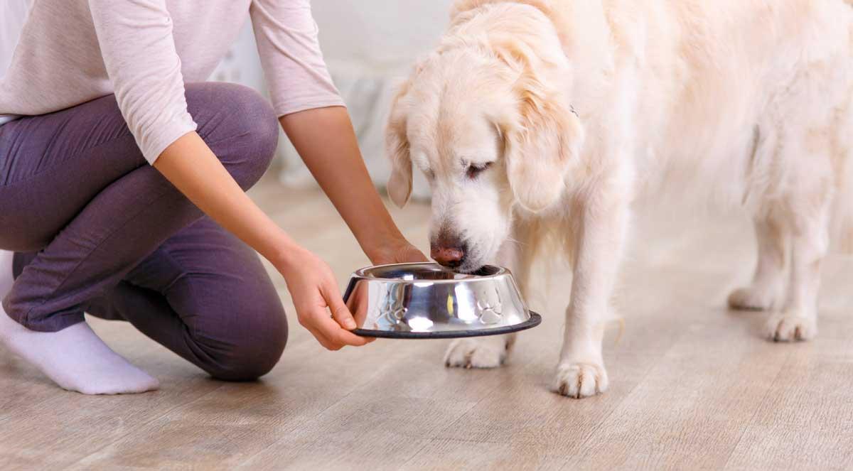 feeding-dog