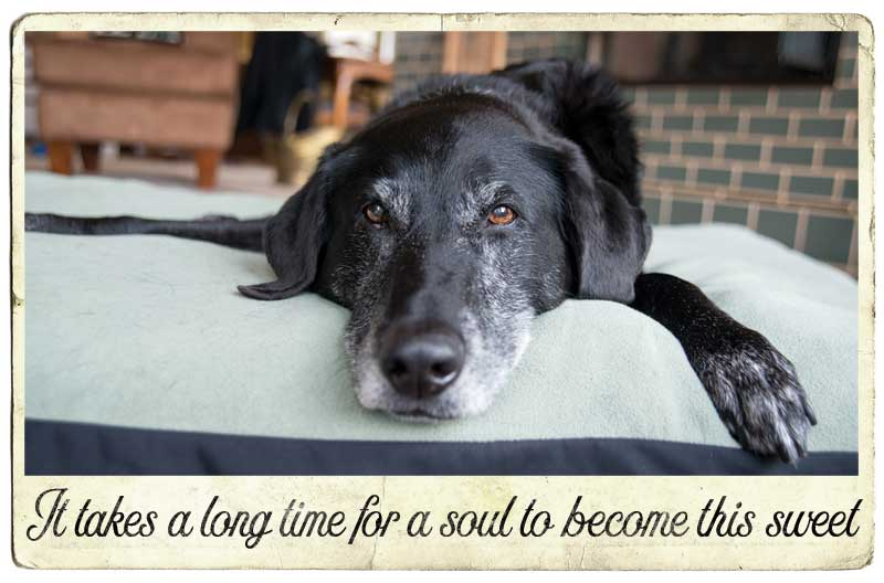 sweet-older-dog-quotes