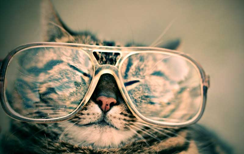 Clever-cat