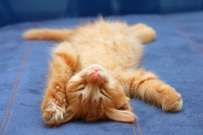 cat-chilling