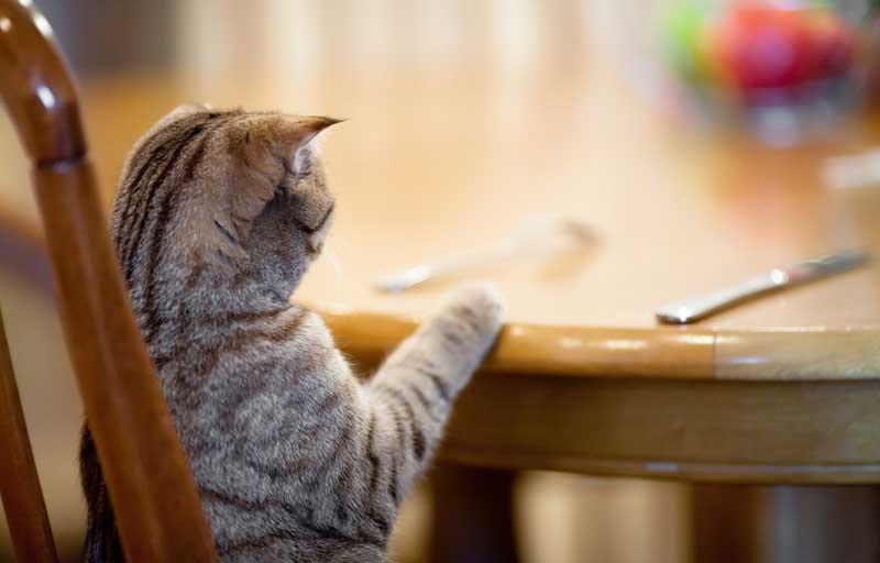 cat-dinner