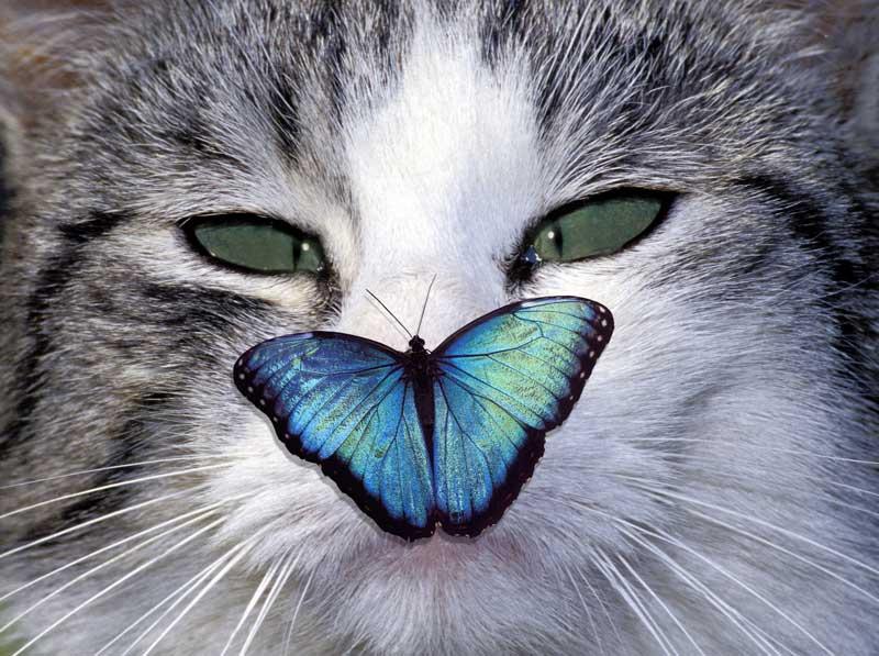 cat-nature