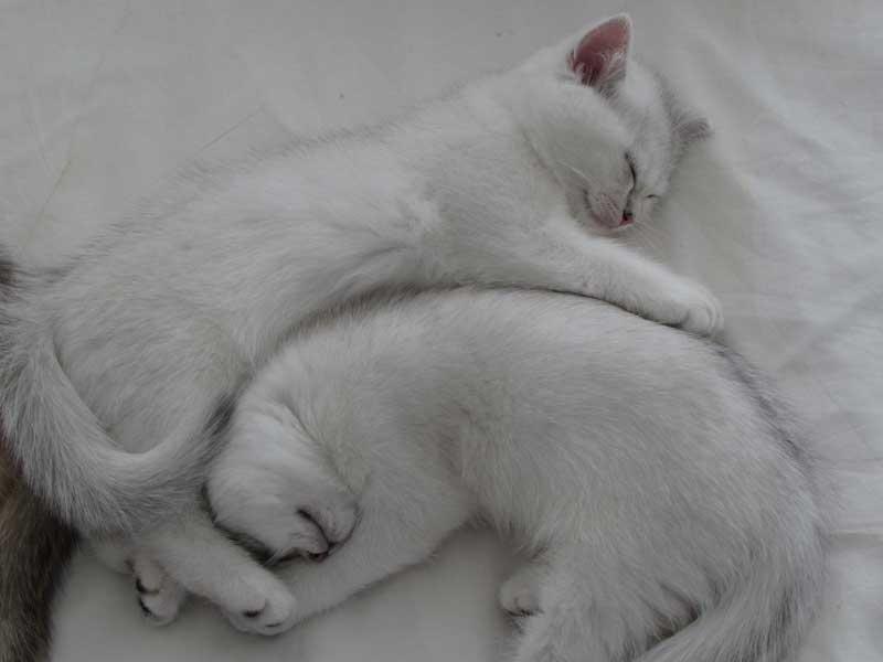 ergonomic-cats