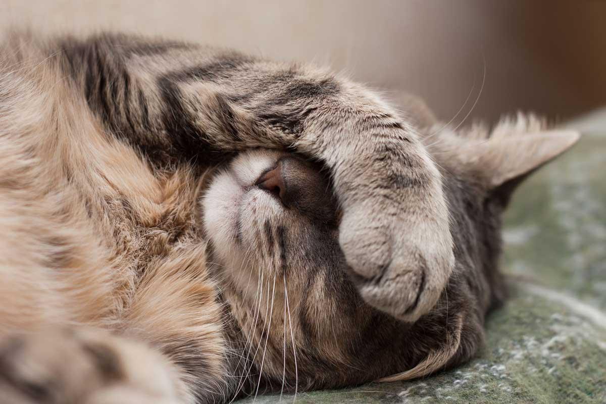 poorly-cat