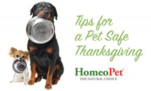PetSafe_Thanksgiving_Tips