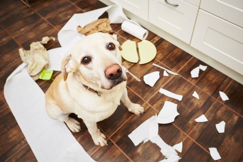 dog-trash