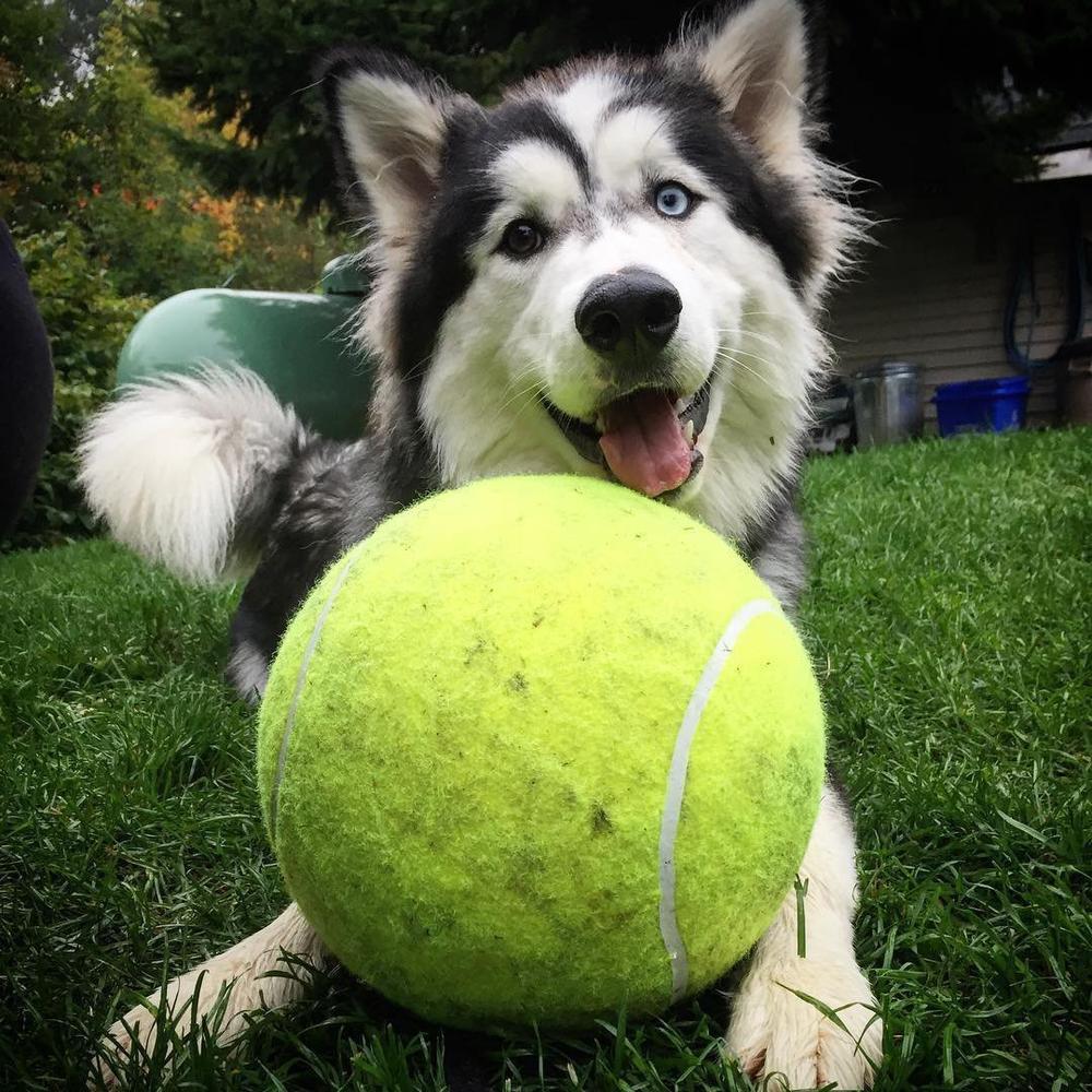 doggy-jumbo-ball