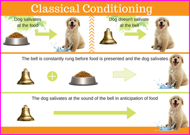 Classical-Conditioning-in-pets