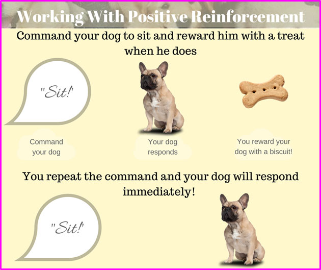 positive-reinforcement-in-pets