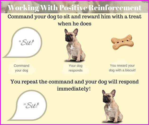 positive-reinforcement-in-pets
