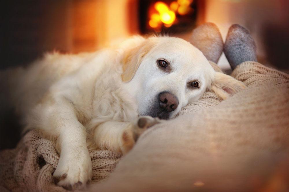 pet-foot-warmer