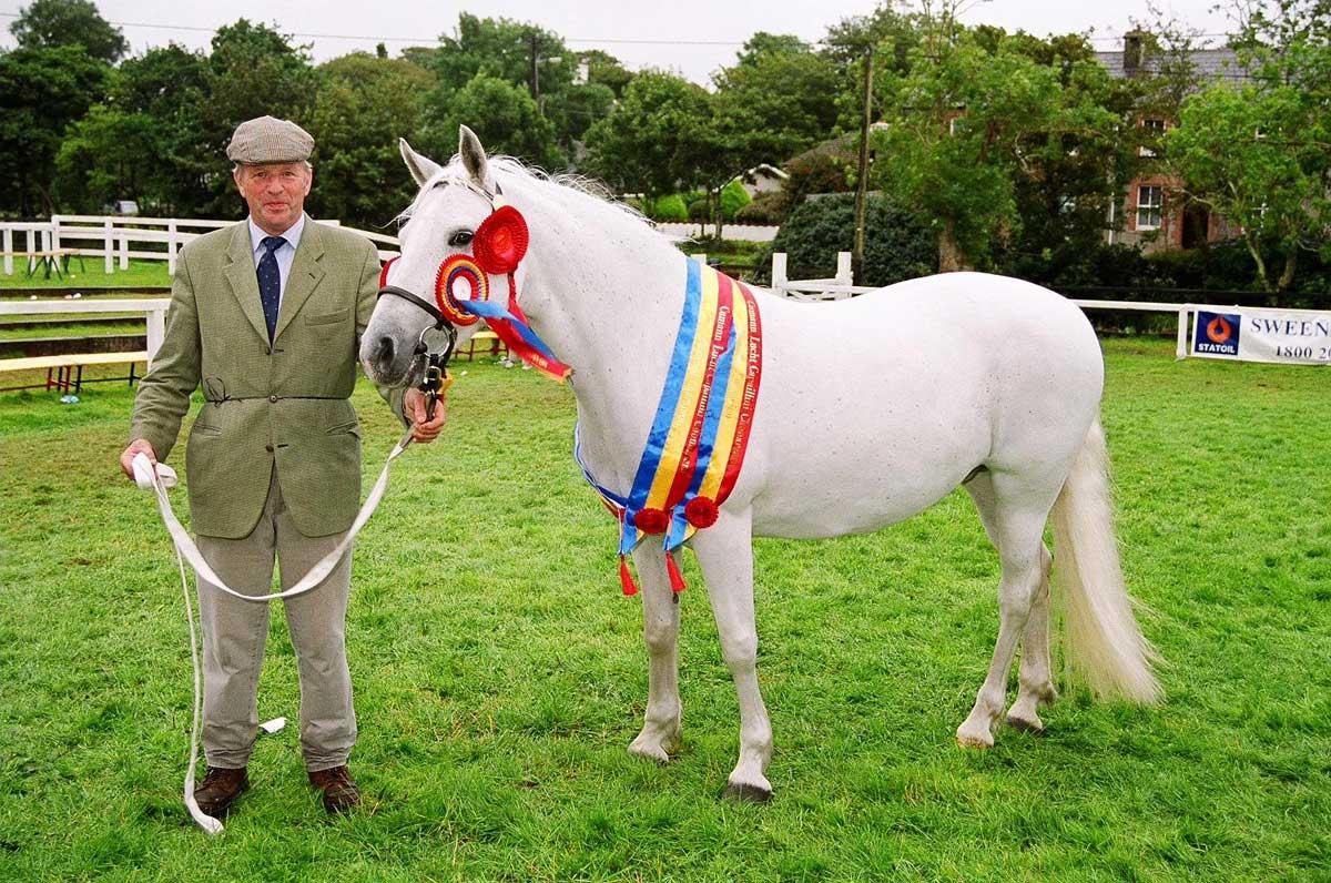 Reasons To Love Irish Horses Homeopet