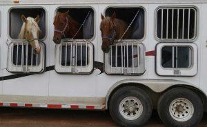 travelling-horses