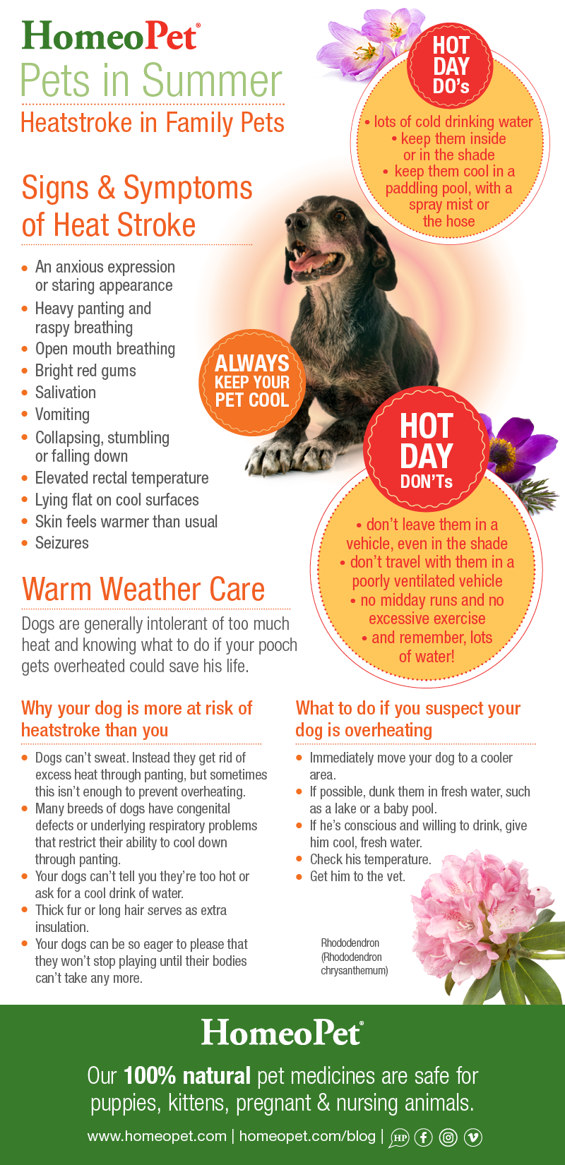 Caring for pets in hot weather infographic