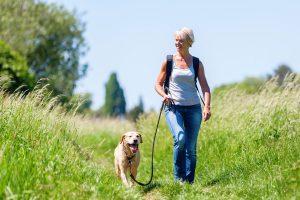 doggie-fitness