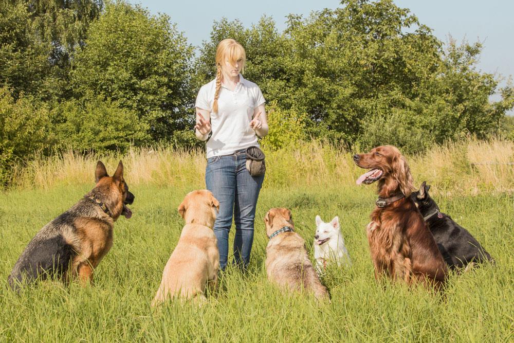Dog-Training2