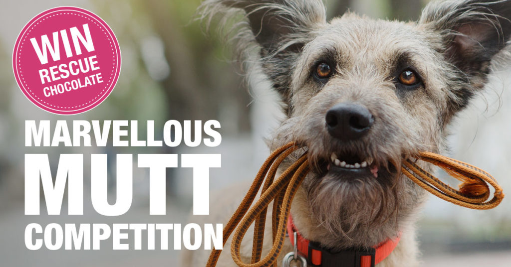 Marvellous_Mutt_Competition