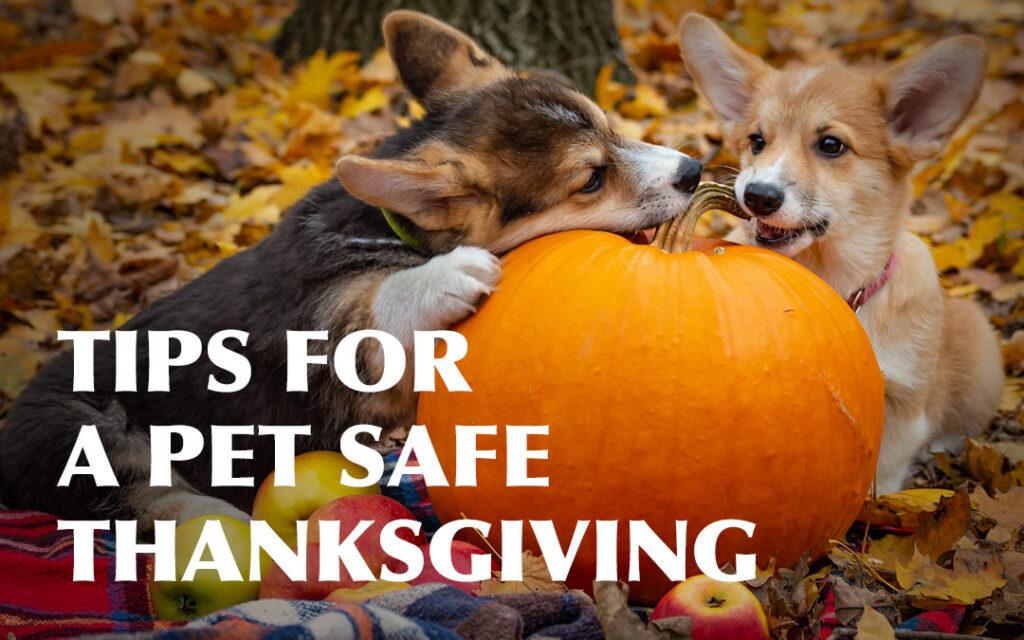 Tips_PetSafe_Thanksgiving